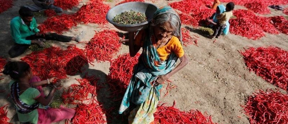 Workers remove stalks from red chillies at a farm on the outskirts of Ahmedabad, India, February 10, 2017. REUTERS/Amit Dave