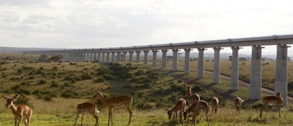 A group of impala graze near the elevated railway line that allows movement of animals below the Standard Gauge Railway (SGR) line linking Nairobi and Naivasha inside the Nairobi national park in Nairobi, Kenya October 16, 2019. REUTERS/Njeri Mwangi - RC157C8B6A20