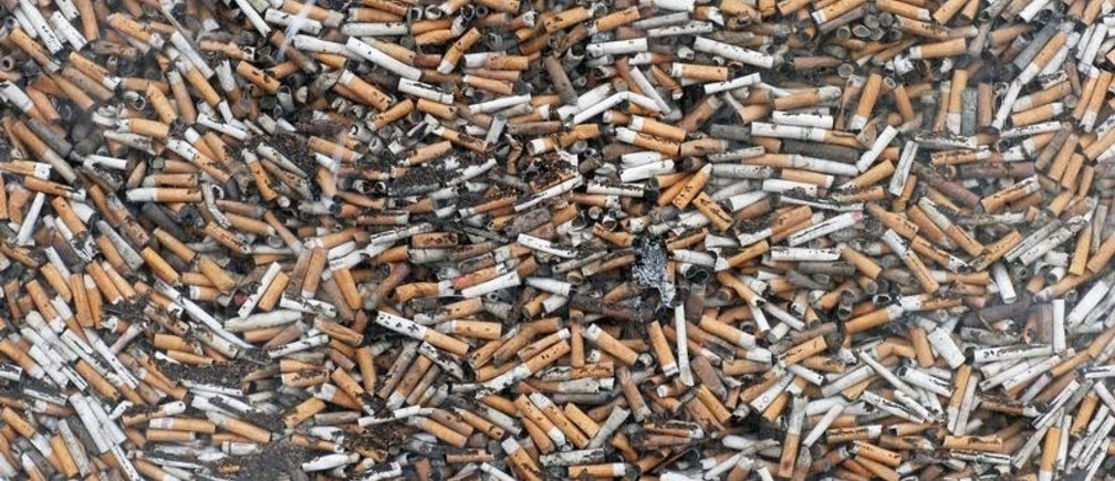 Collected cigarette butts are pictured in a street of Cannes, May 18, 2019. Picture taken May 18, 2019. REUTERS/Stephane Mahe - RC1F82E54B00