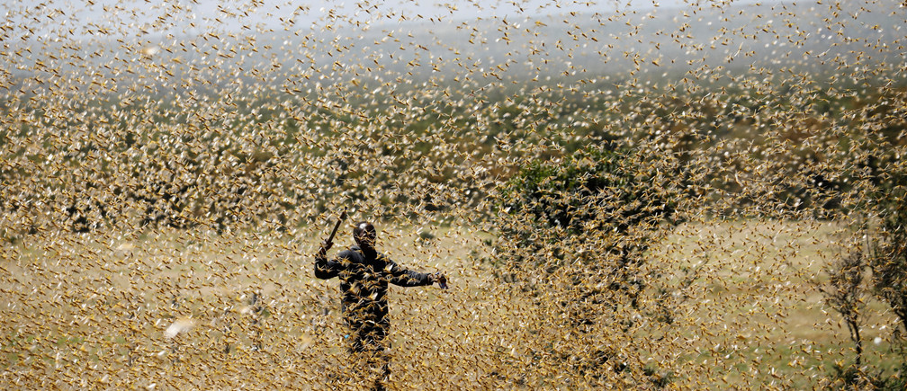 A man attempts to fend-off a swarm of desert locusts at a ranch near the town of Nanyuki in Laikipia county, Kenya, February 21, 2020. Picture taken February 21, 2020. REUTERS/Baz Ratner - RC219F9SLHNL