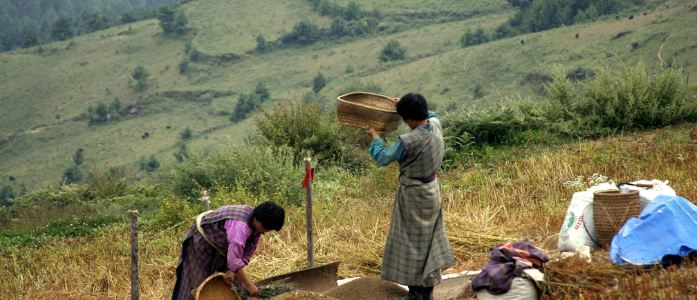 Women dry buckwheat in their field at Bumthang, central Bhutan October 18, 2007.
