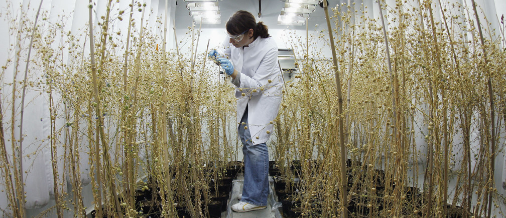 Biologist Kristin Sauer checks plants in a climate chamber at the Goettingen Center for Molecular Biosciences (GZMB) of the Georg-August University in Goettingen October 29, 2007. It may have brought the world aspirin, rocket science, quantum physics and the diesel engine, but Germany's days of scientific glory are long gone and it is now hunting for a new generation of Einsteins.  Picture taken October 29, 2007