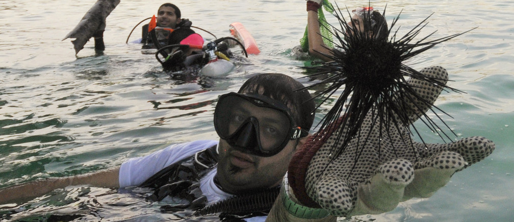 "A diver holds up a sea urchin retrieved during a deep sea dive as part of the ""Clean-Up Arabia"" environmental campaign in Fujairah November 6, 2010. The annual campaign is aimed at cleaning local dive sites and beaches, with volunteers collecting garbage, consisting mainly of fishing nets, plastic and metal waste, from the shores and ocean. REUTERS/Jumana El-Heloueh (UNITED ARAB EMIRATES - Tags: ENVIRONMENT ANIMALS SOCIETY) - GM1E6B61TI301"