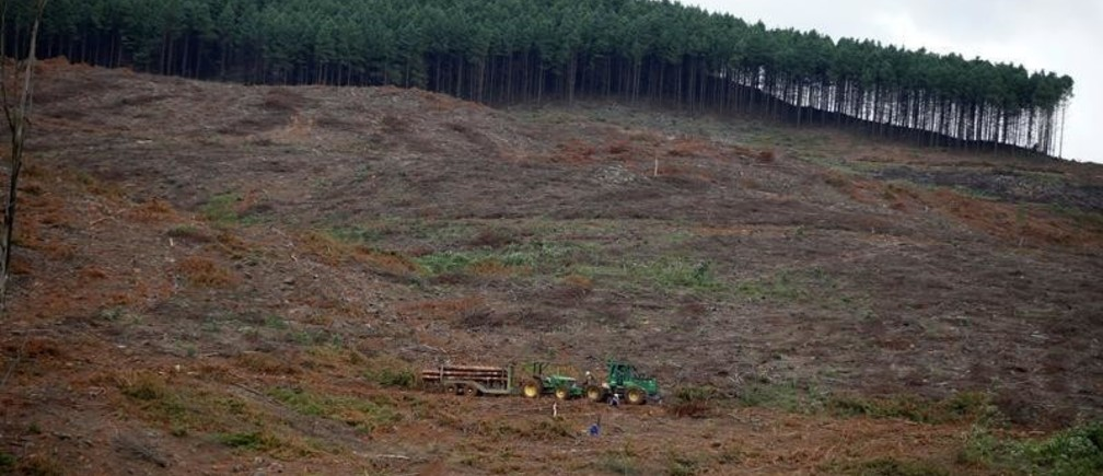 A tractor collecting timber is seen near a forest in Howick, KwaZulu-Natal Province, South Africa , March 09, 2018. Picture taken March 9, 2018. REUTERS/Siphiwe Sibeko - RC1C00F6FB60