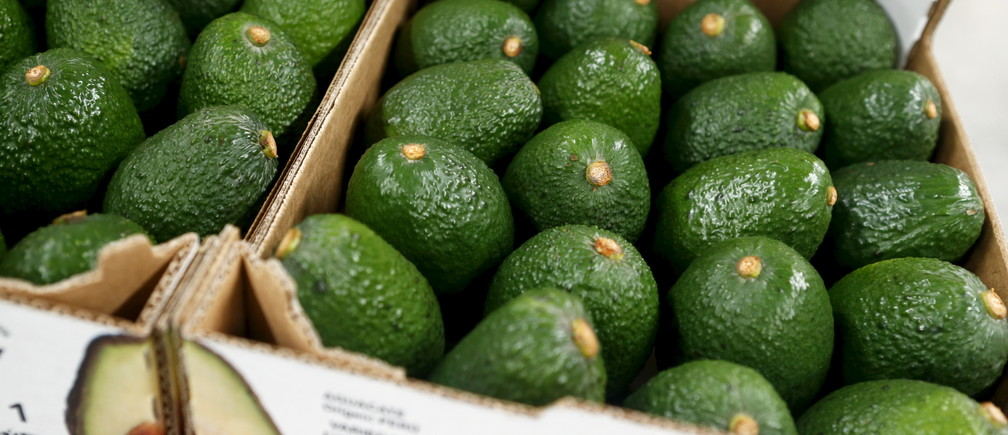 Boxes of avocados are seen at a packaging warehouse of Hoja Redonda plantation in Chincha, Peru, September 3, 2015. The eighth World Avocado Congress, an event dedicated to production, export and marketing of Hass avocados, will be held in Peru from September 13 to September 18. Peru is the second largest exporter of Hass avocados in the world, according to local media. REUTERS/Mariana Bazo - RTX1R0R0