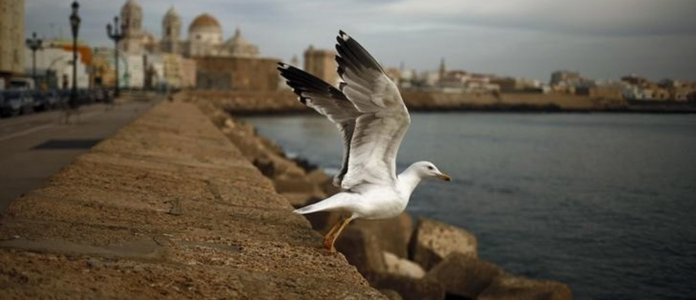 """A seagull takes flight from the seafront boulevard """"El Malecon"""" over the Atlantic ocean in downtown Cadiz, southern Spain, December 8, 2015. REUTERS/Jon Nazca"""