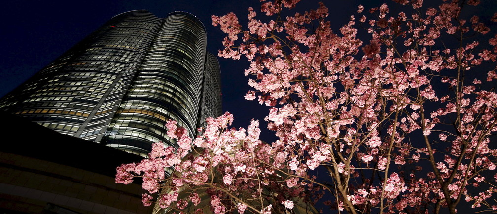 Cherry blossoms are illuminated next to the Roppongi Hills Mori Tower building in Tokyo, Japan, in this March 23, 2016 file photo.