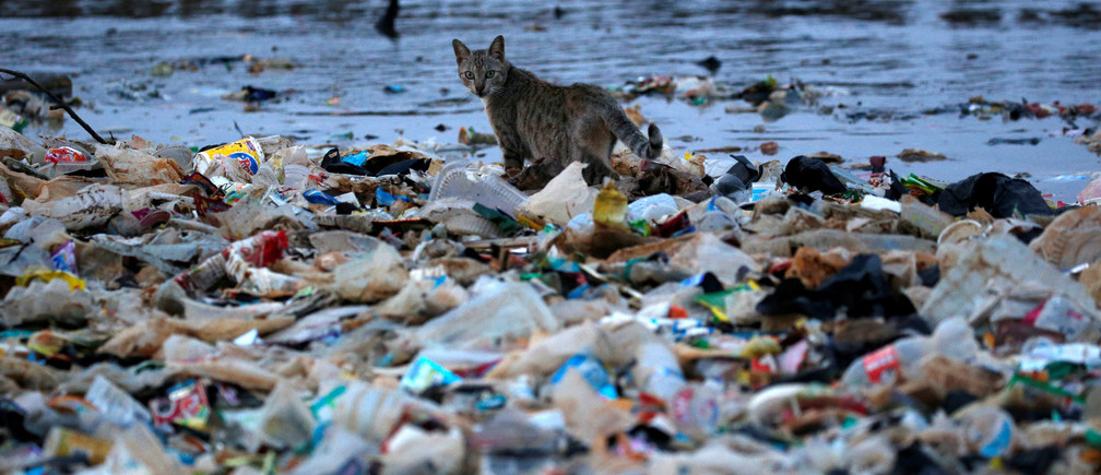 A cat is seen among rubbish at a shoreline in Jakarta, Indonesia, June 21, 2019.