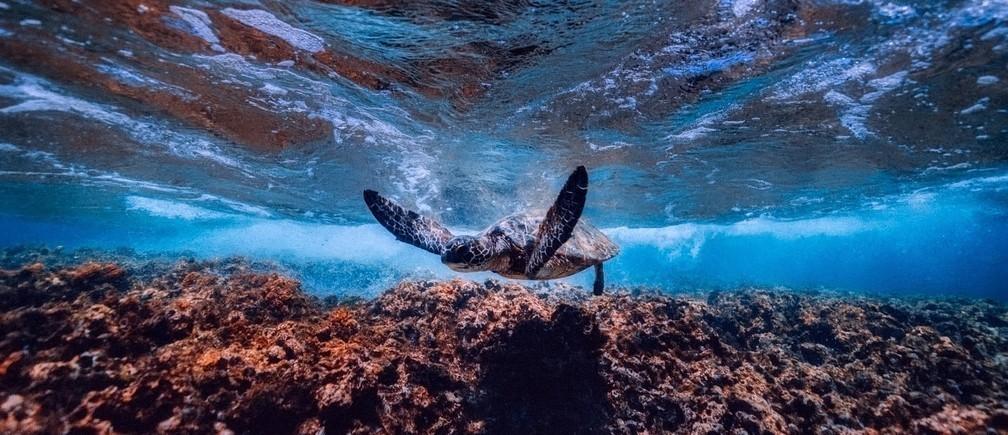 El océano es, con mucho, nuestro mayor ecosistema natural, y necesita nuestra ayuda.