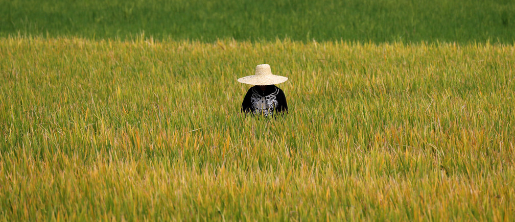 A Filipina farmer works at a rice field in Pinamalayan, Oriental Mindoro, Philippines March 27, 2018.  REUTERS/Erik De Castro - RC173934AA70