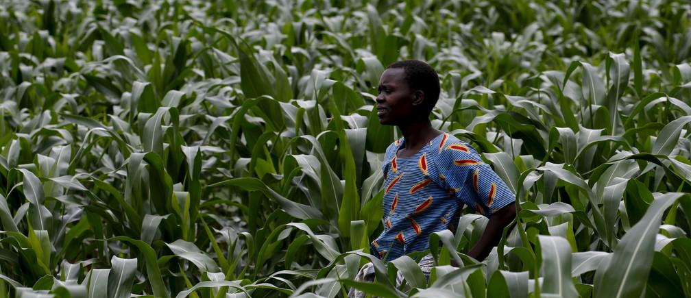 A Malawian subsistence farmer