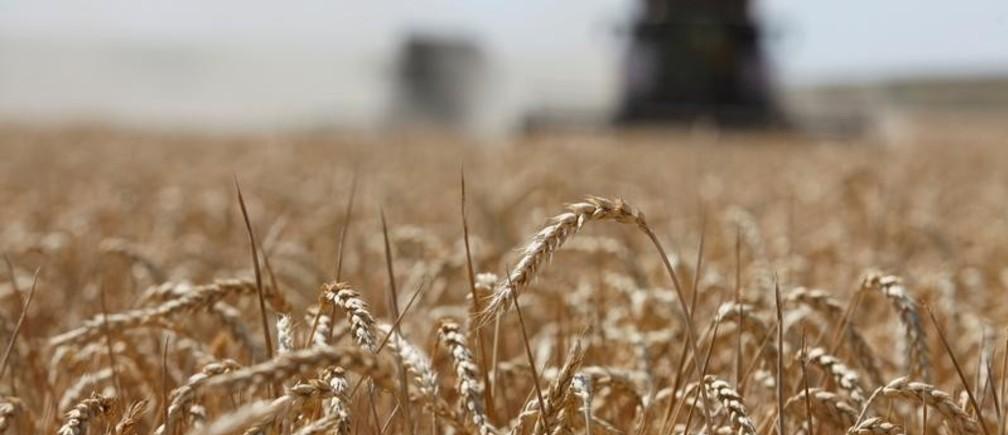 Combines harvest wheat in a field near the village of Kamennobrodskaya in Stavropol region, Russia July 4, 2019. REUTERS/Eduard Korniyenko - RC1C8E837080