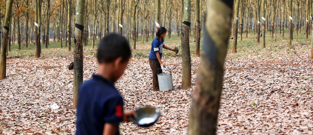 Workers collect rubber sap at a farm in Tbong Khmum province, Cambodia, February 10, 2019. REUTERS/Samrang Pring - RC1D681AF1E0