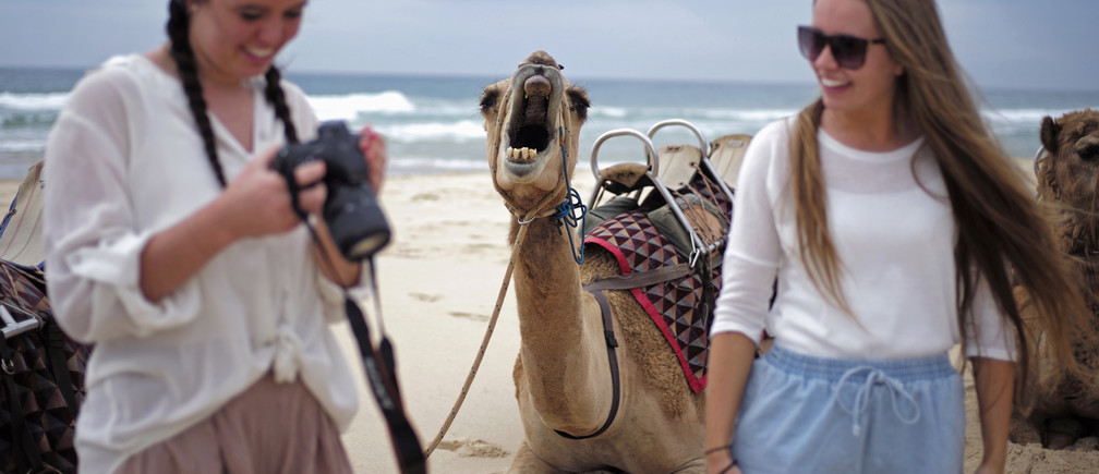 A camel yawns as a tourist checks images on her camera following a ride on a camel safari alongside the Pacific Ocean on Lighthouse Beach, north of Sydney, December 4, 2014