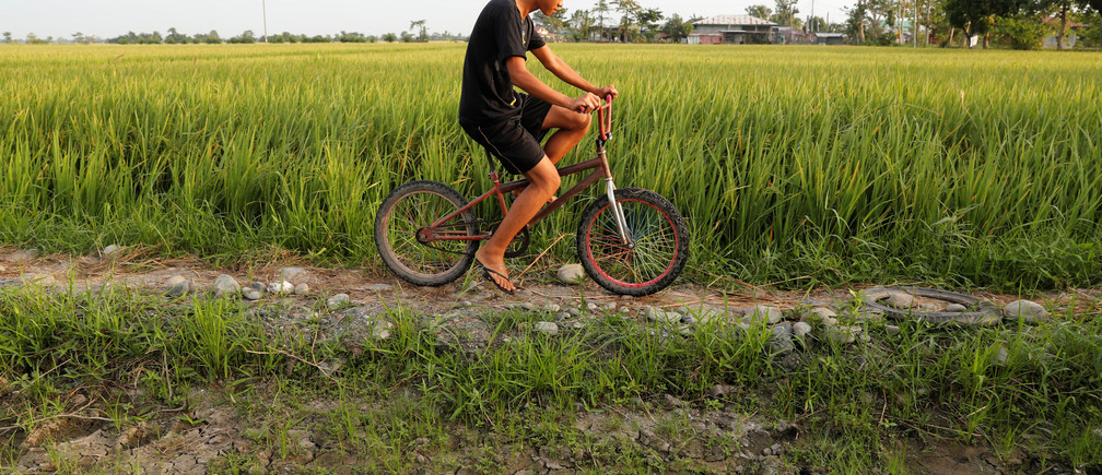 A farmer rides on a bicycle past a ricefield in Naujan, Oriental Mindoro in Philippines, August 27, 2018. Picture taken August 27, 2018. REUTERS/Erik De Castro - RC1A7E5115F0