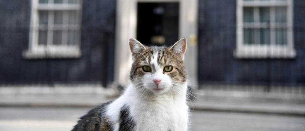 Larry the cat sits in the street, at Downing Street in London, Britain May 22, 2019. REUTERS/Toby Melville     TPX IMAGES OF THE DAY - RC1C8D22C4D0