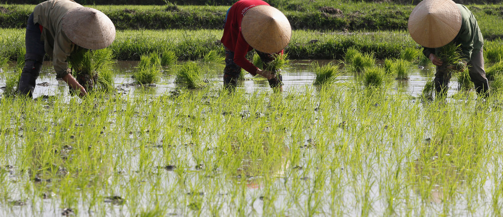 Farmers plant rice on a rice paddy field in Ha Tinh province, Vietnam February 4, 2017. REUTERS/Kham - RC1728107BB0