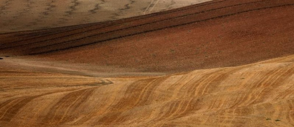 Tire marks of a harvester are seen on a freshly harvested field during a strong drought in Teba, near Malaga, southern Spain August 6, 2017. Picture taken August 6, 2017. REUTERS/Jon Nazca - RC1A951EB7D0