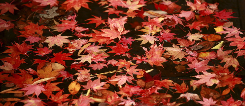 Autumn leaves from a Japanese maple tree float in a pool of water at the Franklin Delano Roosevelt Memorial in Washington