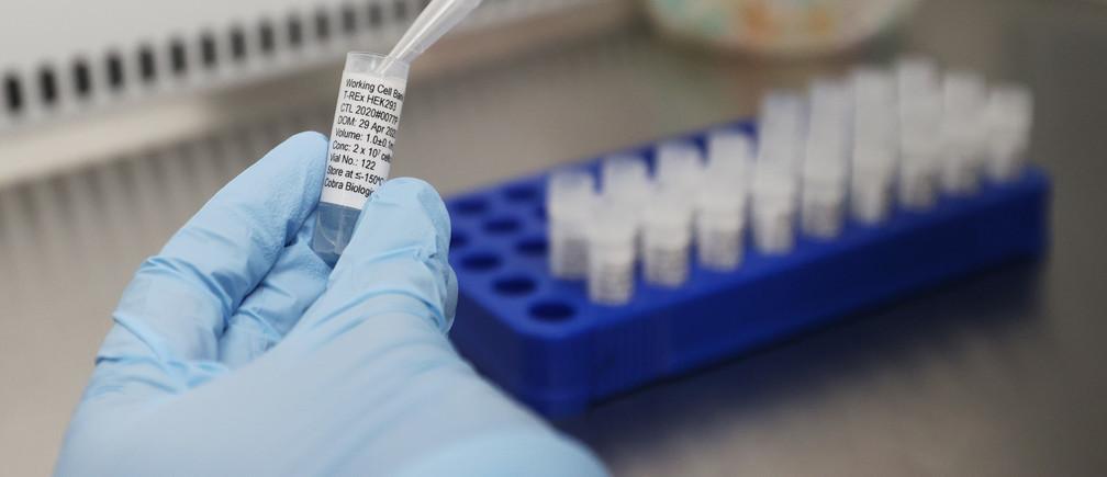 Científicos de Cobra Biologics, Keele, Gran Bretaña, trabajan en una potencial vacuna para COVID-19.