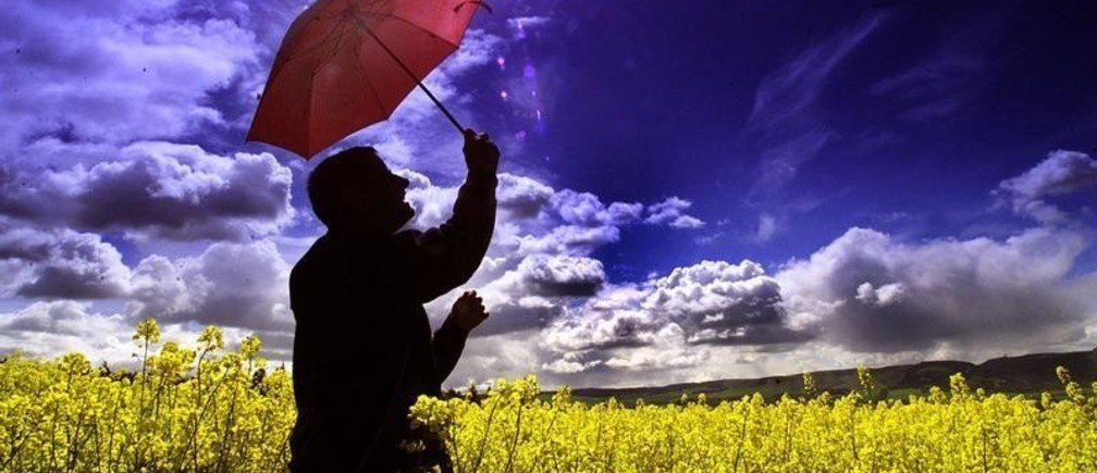 A man shelters under a red umbrella in a field of oilseed rape, May 18,as the government announced that farmers in the UK are unknowingly growing a strain of the crop that has been genetically modified after planting cross pollinated seed imported from Canada. As the plants come into flower, it becomes impossible to avoid further cross contamination of conventional crops, as the authorities have lost control over where they are being grown.JJM - RP2DRIBAIYAA