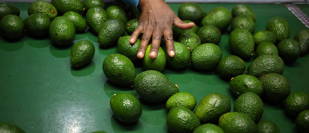 A worker sorts avocados at a farm factory in Nelspruit in Mpumalanga province, about 51 miles (82 km) north of the Swaziland border, South Africa, June 14, 2018
