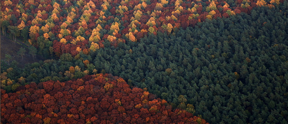 An aerial view shows a mixed forest on a sunny autumn day in Recklinghausen, Germany, October 31, 2015.   REUTERS/Ina Fassbender - GF20000040189