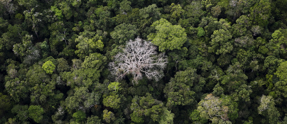 An aerial view shows the Amazon rainforest at the Bom Futuro National Forest near Rio Pardo in Porto Velho, Rondonia State, Brazil, September 3, 2015.