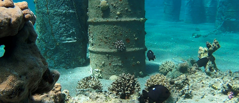 A still image taken from underwater video footage shows corals and fish near barrels, as divers from Israel Nature and Parks Authority remove corals from objects which are part of industrial debris left by Eilat Ashkelon Pipeline Company (EAPC) after it scaled back its operations, in the Red Sea, near Katza beach in Eilat, Israel March 10, 2019.  Courtesy Omri Omessi/Israel Nature and Parks Authority/Handout via REUTERS