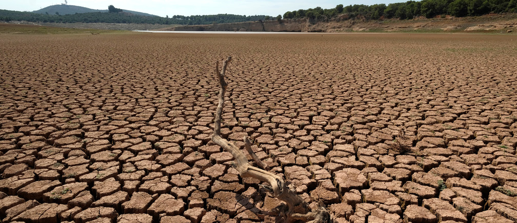 The remains of a dead tree are pictured at the almost empty Maria Cristina water reservoir  during a severe drought near Castellon, Spain, September 14, 2018. REUTERS/Heino Kalis - RC1D52A2BDC0