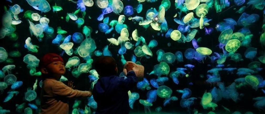 Young visitors stand in front of jellyfish at Chimelong Ocean Kingdom in Zhuhai, China September 4, 2018. Picture taken September 4, 2018.  REUTERS/Bobby Yip      TPX IMAGES OF THE DAY - RC17B14F9400