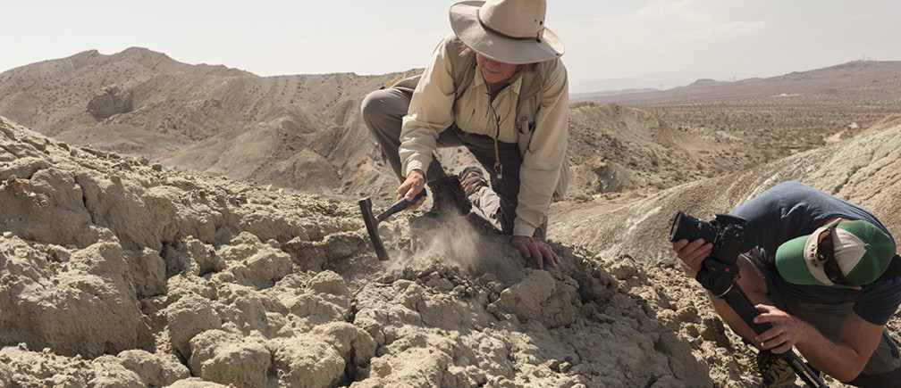 Dr. Katherine Badgley looks out over her field site in the Mojave Desert in California