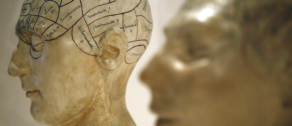 Plaster phrenological models of heads, showing different parts of the brain, are seen at an exhibition at the Wellcome Collection in London March 27, 2012.  We've pickled it, dessicated it, drilled it, mummified it, chopped it and sliced it over centuries, yet