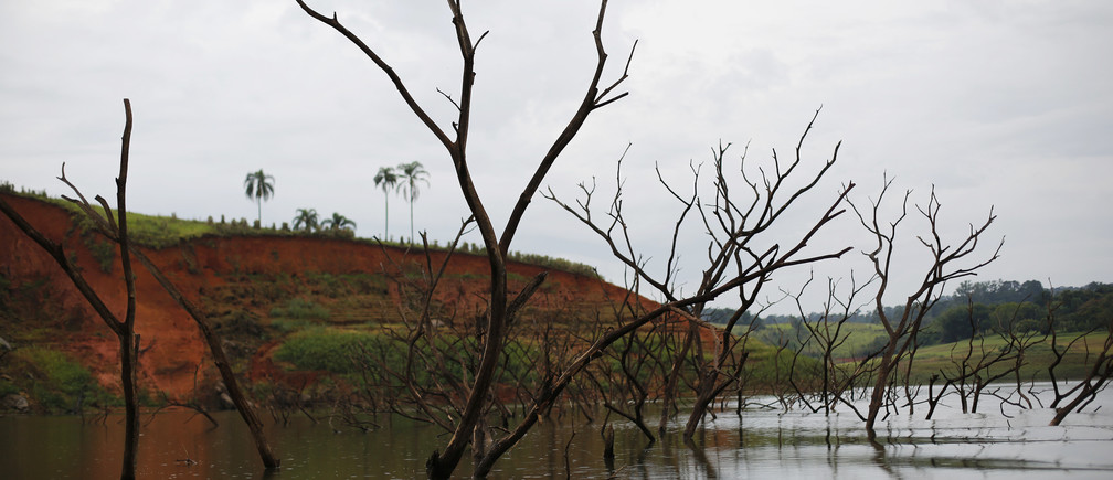 Trees rising out of the Jaguari reservoir, next to the re-emerging old city of Igarata, Sao Paulo State, February 4, 2015.