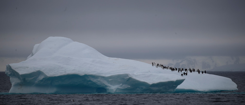 "A group of chinstrap penguins walk on top of an iceberg floating near Lemaire Channel, Antarctica, February 6, 2020. REUTERS/Ueslei Marcelino     SEARCH ""ANTARCTICA PENGUINS"" FOR THIS STORY. SEARCH ""WIDER IMAGE"" FOR ALL STORIES. - RC20YE957SAN"