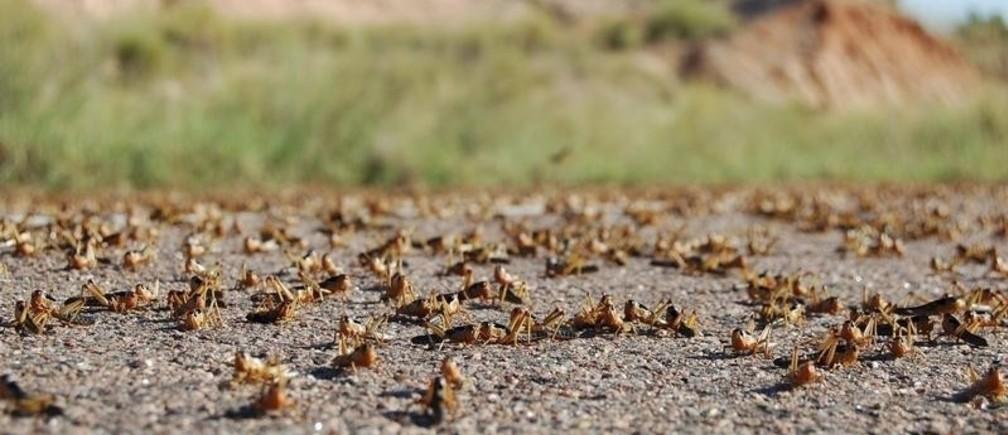 How can we control locust swarms? | World Economic Forum