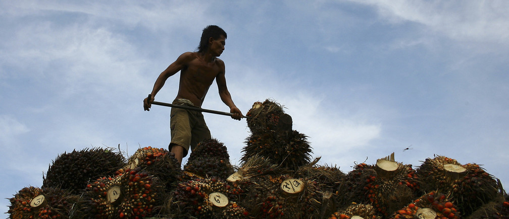 A worker unloads oil palm fruits to a local palm oil factory in the Serdang Bedagai district of Indonesia's North Sumatra province, November 30, 2011. Palm oil production in Indonesia, the world's top palm oil producer, is estimated to hit 23 million to 24 million tonnes in 2011, but could rise by as much as 1.5 million tonnes next year, a leading planter told Reuters this week. Picture taken November 30, 2011
