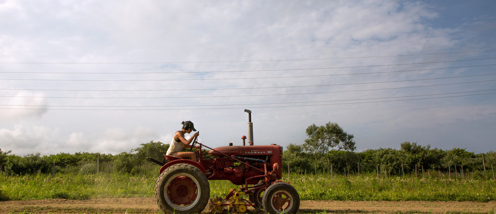 Farmer Isabel Milligan drives a tractor as she weeds and transplants crops on the farm in Amagansett, New York, U.S., July 11, 2019. Picture taken July 11, 2019.   REUTERS/Lindsay Morris - RC1B9CA1E620