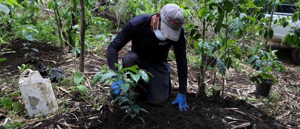 A worker plants new coffee trees in a farm in Santa Ana, El Salvador on May 25, 2018. Picture taken on May 25, 2018. REUTERS/Jose Cabezas - RC1354F348A0