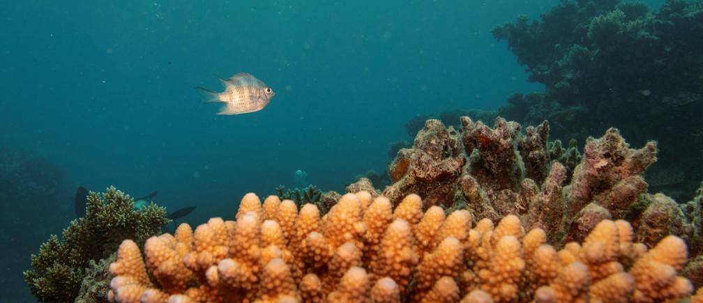 Selon une nouvelle étude, la vie marine pourrait se rétablir d'ici trois décennies.