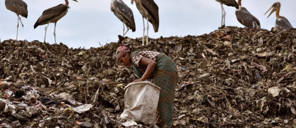 A scavenger collects recyclable items next to a flock of Greater Adjutant birds at a dump site in Guwahati, India June 4, 2018. REUTERS/Anuwar Hazarika - RC18C8D01050