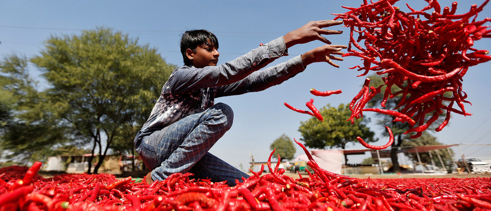 A boy spreads red chillies to dry at a farm on the outskirts of Ahmedabad, India, February 10, 2017. REUTERS/Amit Dave - RC15741D0300