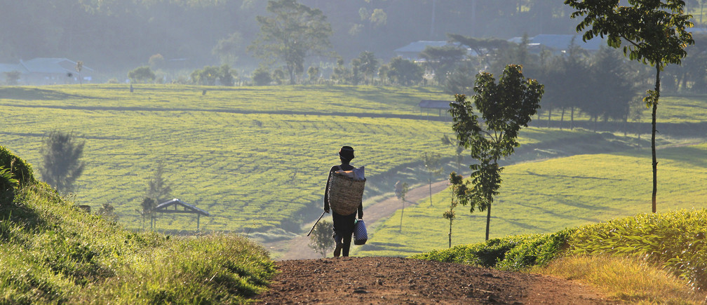 A man walks in the early morning to start his day picking tea leaves at a plantation in Nandi Hills, in Kenya's highlands region west of capital Nairobi, November 5, 2014. Emerald-coloured tea bushes blanketing the rolling hills of Nandi County have long provided a livelihood for small-scale farmers, helping make Kenya one of the world's biggest tea exporters. But ideal weather and bigger harvests, instead of producing bumper earnings, have led to a glut of Kenya's speciality black tea. Picture taken November 5, 2014. To match story KENYA-TEA/ REUTERS/Noor Khamis (KENYA - Tags: AGRICULTURE BUSINESS EMPLOYMENT COMMODITIES) - GM1EABG17XM01