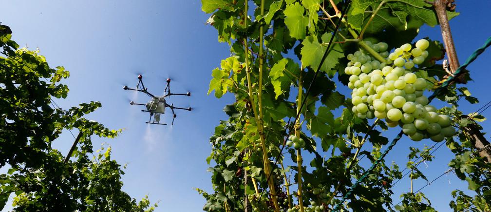An agriculture spray drone of Landi Weinland Genossenschaft farmers cooperative sprays plant protection agent over a vineyard near the village of Benken, Switzerland August 14, 2019.  REUTERS/Arnd Wiegmann - RC1CDA525D90