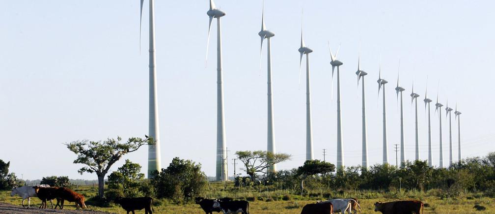 Cattle walk inside a wind farm in the city of Osorio, southern Brazil, November 30, 2007. REUTERS/Jamil Bittar (BRAZIL) - GM1DWSFNPSAA