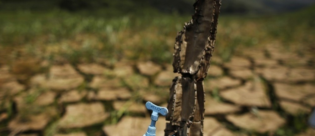 "A drought-related cactus installation called ""Desert of Cantareira"" by Brazilian artist and activist Mundano is seen at Atibainha dam, part of the Cantareira reservoir, during a drought in Nazare Paulista, Sao Paulo December 2, 2014. Sao Paulo, Brazil's drought-hit megacity of 20 million, has about two months of guaranteed water supply remaining as it taps into the second of three emergency reserves, officials say.  REUTERS/Nacho Doce (BRAZIL - Tags: DISASTER ENVIRONMENT SOCIETY) - RTR4GH6M"