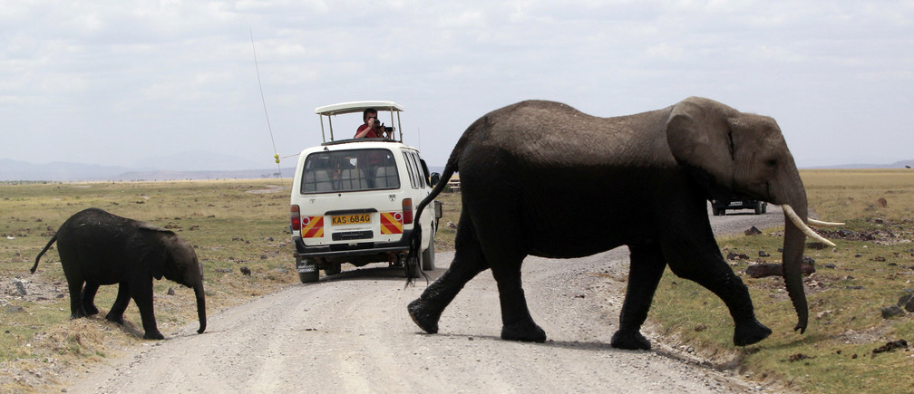 An adult and infant elephant walk across the road past a tour-van after cooling themselves in a pond during a census at the Amboseli National Park, 290 km (188 miles) southeast of Kenya's capital Nairobi, October 9, 2013. Kenyan and Tanzanian governments are conducting a joint aerial count of elephants and other large mammals in the shared ecosystem of the Amboseli- West Kilimanjaro and Natron- Magadi landscape. The census will cover a 25,623 square kilometer area including 9,214 square kilometers of the Amboseli area, 6348 square kilometers of the Namanga-Magadi areas in south-western Kenya and 3,013 square kilometers of the West Kilimanjaro and 7,047 square kilometers of the Natron areas in North Tanzania. Picture taken October 9, 2013. REUTERS/Thomas Mukoya (KENYA - Tags: ENVIRONMENT ANIMALS) - GM1E9AB0PA901