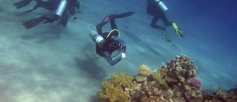 Divers look at coral reefs in the Red Sea resort of Dahab, Sinai, October 3, 2012. REUTERS/Asmaa Waguih (EGYPT - Tags: SOCIETY TRAVEL) - GM1E8A4038J01