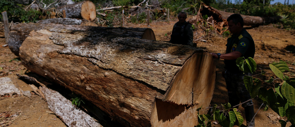 """Agents of the Brazilian Institute for the Environment and Renewable Natural Resources, or Ibama, check a felled tree, found in a deforested area during """"Operation Green Wave"""" to combat illegal logging in Apui, in the southern region of the state of Amazonas, Brazil, August 1, 2017. REUTERS/Bruno Kelly        SEARCH """"DEFORESTATION"""" FOR THIS STORY. SEARCH """"WIDER IMAGE"""" FOR ALL STORIES. - RC17BF3721A0"""