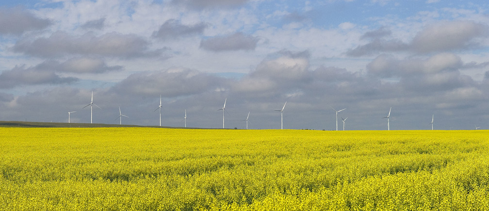 A canola crop used for making cooking oil sits in full bloom on the Canadian prairies with windmills in the background near Fort Macleod, Alberta, July 11, 2011.